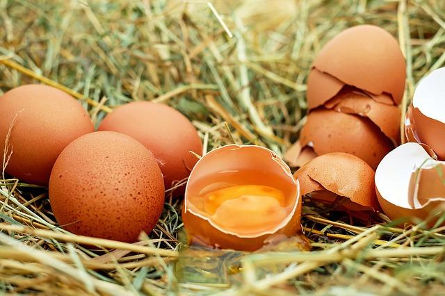 uova-contaminate-germania