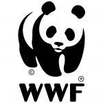 Pesce sostenibile, dal WWF una guida in 5 punti al consumo responsabile