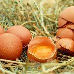 Scandalo uova contaminate in Germania e Belgio, ecco perché mangiare Made in Italy