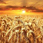 Pasta, riso e grano: da febbraio arriva l'obbligo di indicare l'origine in etichetta