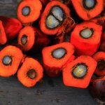 L'Unione Europea ci ripensa sull'olio di palma, rischi minimi solo per i neonati