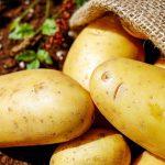 Arriva la Potato Plastic; La plastica fatta con le patate biodegradabile