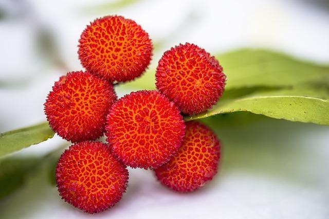 Corbezzolo: un frutto dimenticato dalle proprietà sorprendenti